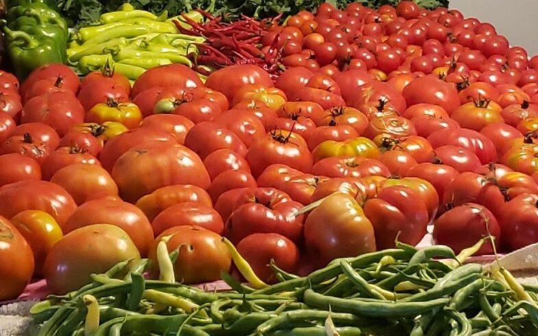 Three Easiest and most Versatile Plants for Beginner Gardeners